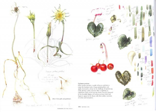 Botanical Sketchbook1