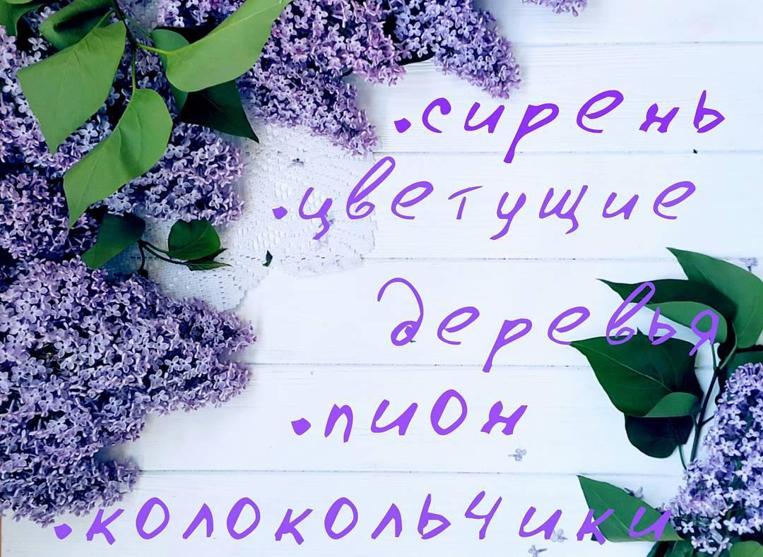 13151041_1143385679039340_565346687_n(1)